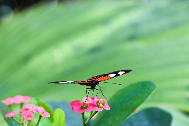 O que fazer em Key West: Key West Butterfly and Nature Conservatory